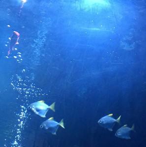 Aquarium, Saltwater Grill, Panama City Beach, Florida
